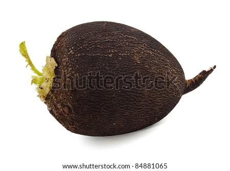 Black radish on the white background - stock photo