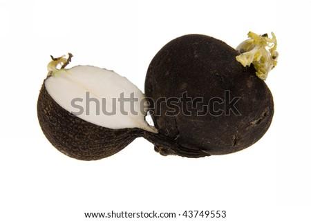Black Radish, turnip isolated on white - stock photo
