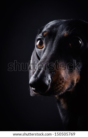 black rate on a black background - stock photo