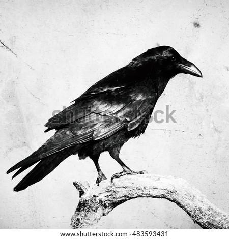 Birds Flying Hooded Cr...