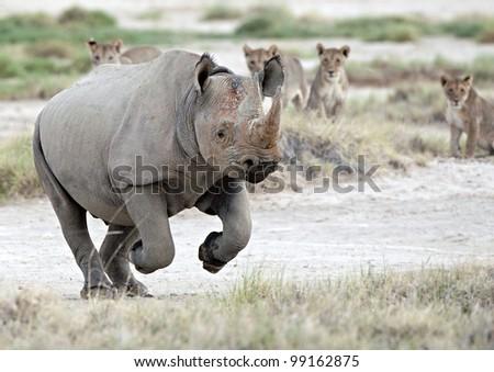 Black Rhino Escape - stock photo