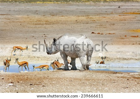 Black Rhinoceros and springbok around a waterhole in Etosha - stock photo
