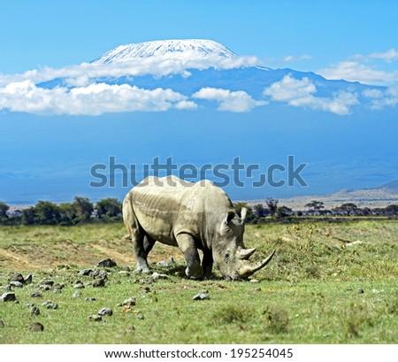 Black rhinoceros in Nakuru National Park in Kenya  - stock photo