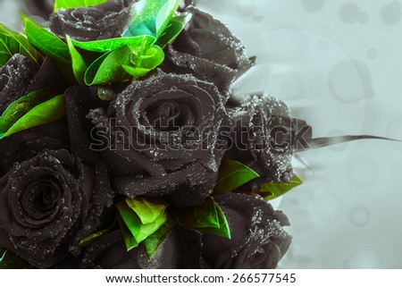 Black rose background - stock photo