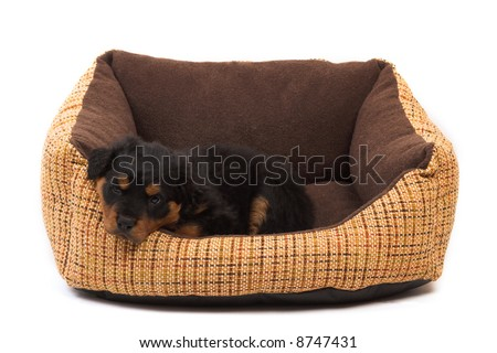 black rottweiler puppy resting on her bed - stock photo