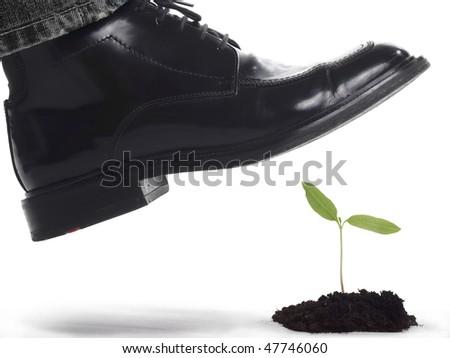 Black shoe above a tiny plant - stock photo