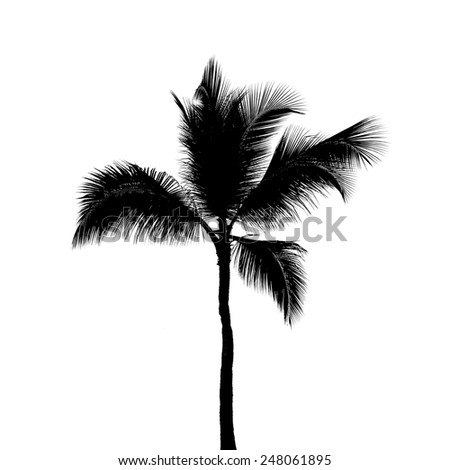 Black silhouette of one coconut palm tree isolated on white background - stock photo
