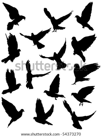 Black silhouettes of pigeon. - stock photo