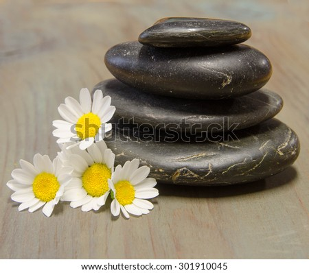 Black smooth stones and daisies for your spa projects