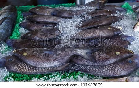 Black Snapper Fish at the Washington DC Fish Market - stock photo