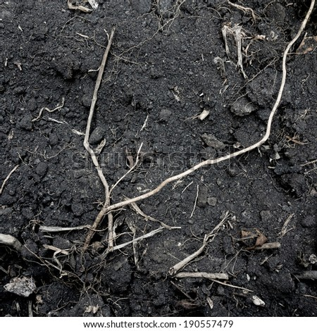 Black soil with tree root texture