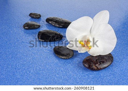Black spa stones and white orchid flowers over blue background. Closeup.