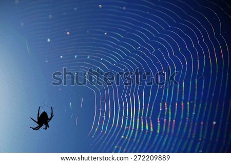 Black Spider on a Rainbow Web - stock photo