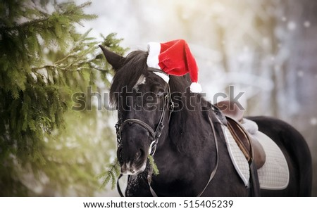 Black sports horse with fir-tree branches in a a red Santa Claus hat