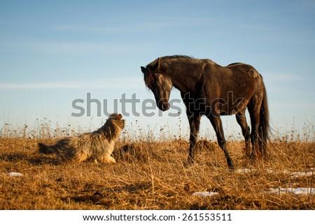Black stallion and dog - stock photo