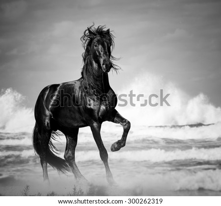 black stallion by the seaside in the wild - stock photo