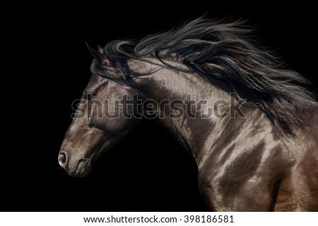 Black stallion in motion portrait isolated on black background - stock photo