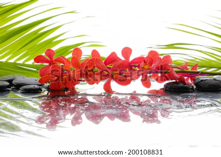 Black stones and branch red orchid and palm leaf background - stock photo