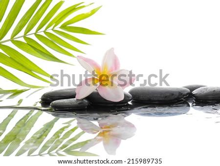 Black stones and frangipani and palm leaf background - stock photo