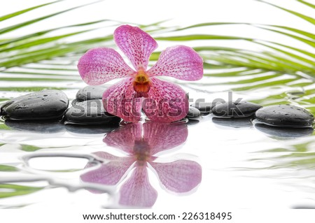 Black stones and orchid and palm leaf background - stock photo