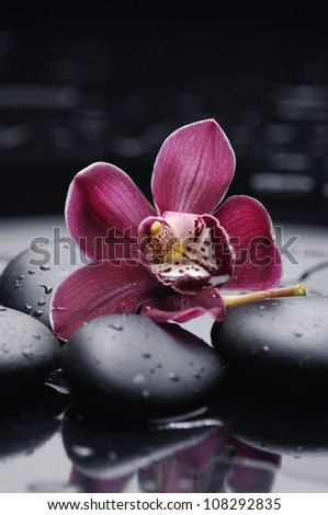 black stones and orchid with water drops - stock photo