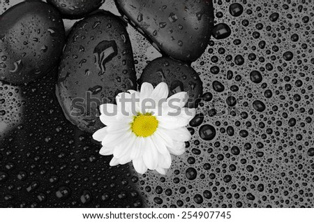 black stones and white flower with water drops - stock photo