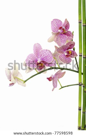 black stones in balance with branch pink orchid - stock photo