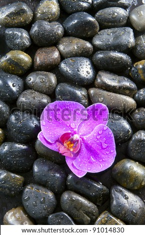 Black stones, purple orchids, and water droplets.