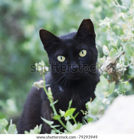 black street cat portrait on green background - stock photo