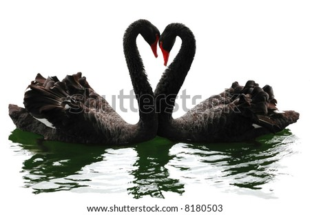 Black swans heart. Isolated over white. Valentine series. - stock photo