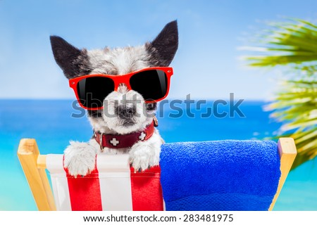 black terrier dog relaxing on a fancy red  hammock with sunglasses in summer vacation holidays at the beach under the palm tree