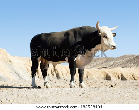Black Texas longhorn bull breed with sawed with his horns against the sky - stock photo