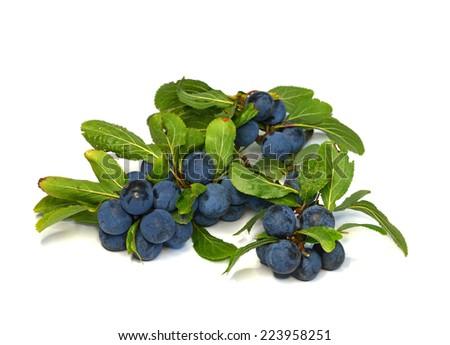 black thorn - stock photo