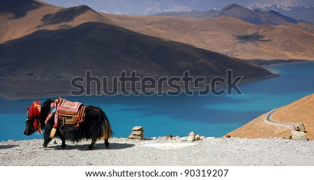 Black Tibetan yak in front of a blue lake