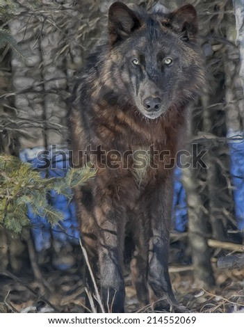 Black timber wolf staring from forest - stock photo