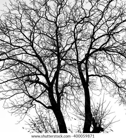 Black tree - stock photo