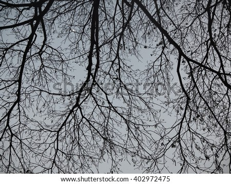 black tree branch