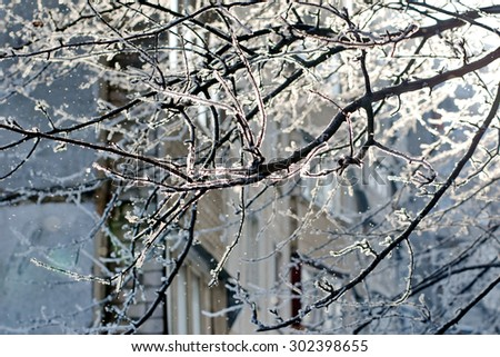 black tree branches covered with snow - stock photo