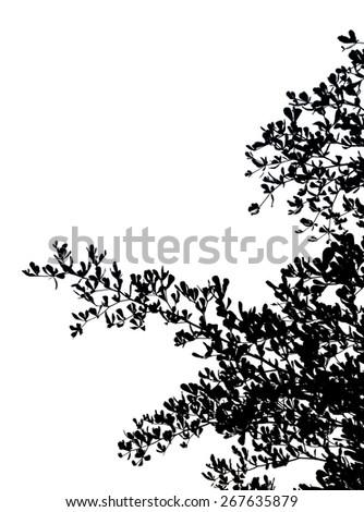 black tree on white background - stock photo