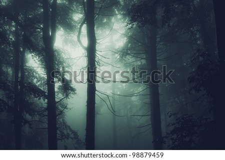 black tree trunk in a dark pine tree forest - stock photo
