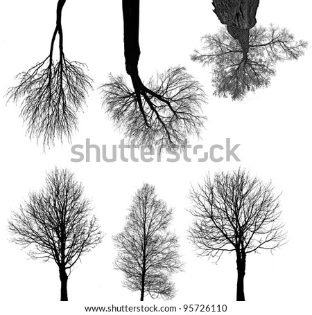 black trees silhouettes isolated on white background - stock photo
