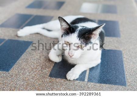 Black & White asia cat on tiled floor,selective focus on its eye - stock photo
