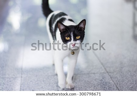 Black & White cat - stock photo
