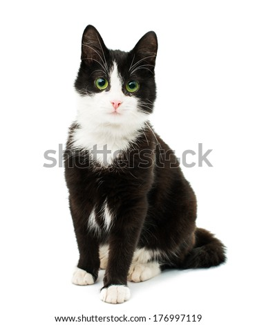 Black & white cat sit on white isolated background. - stock photo
