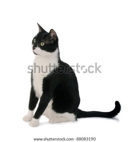 Black & white cat sit on white isolated background. - stock photo