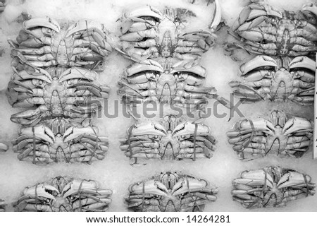 Black & White Crabs on ICE - stock photo