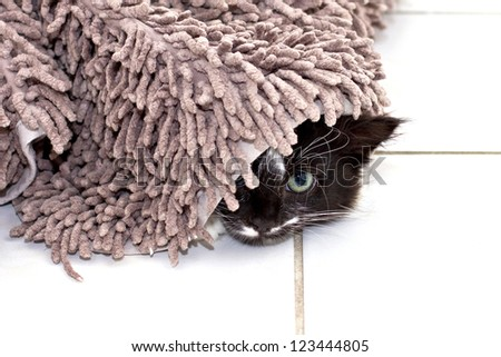 Black-white kitten hiding under the carpet - stock photo