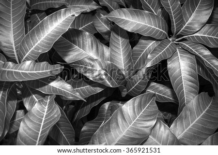 Black & White leaves texture background macro