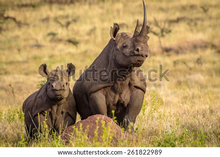 Black White Rhino Mum with Baby on top of termite hill - stock photo