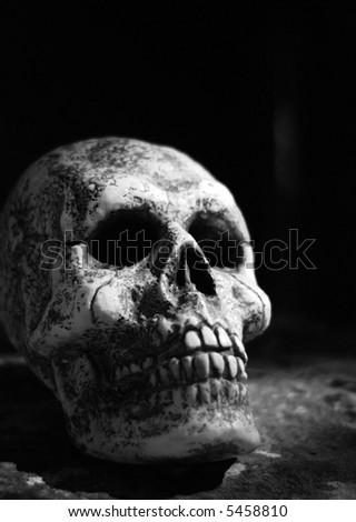 black & white skull - stock photo